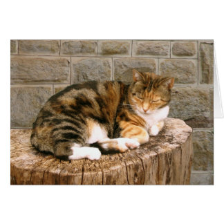 Pussels - Cat on a Stump Card