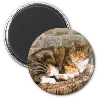 Pussels - Cat on a Stump Magnets