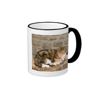 Pussels - Cat on a Stump Coffee Mugs