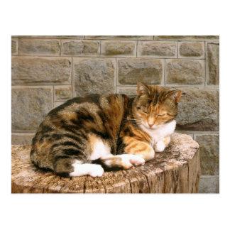 Pussels - Cat on a Stump Postcard