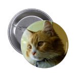 pussy cat pinback button