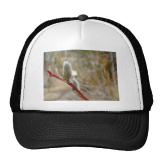 Pussy Willow Hats