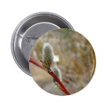 Pussy Willow Pinback Buttons