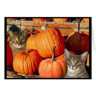 Pussycats and Pumpkins Greeting Card