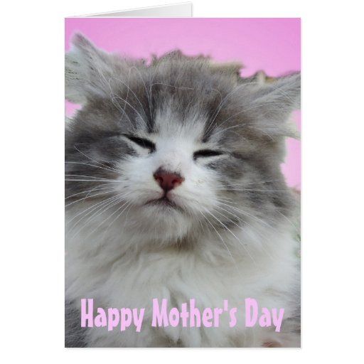 Put on a Happy Face   Kitten Greeting Cards