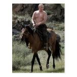Putin descamisado monta un caballo postal