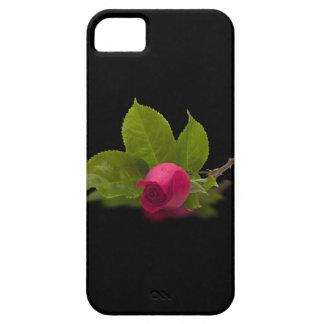 Putrefacción de Roten Rosenknospe Alecs Funda Para iPhone 5 Barely There