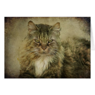 Putz the Cat Stationery Note Card