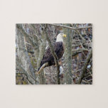 Puzzle./ Bald Eagle with lunch.