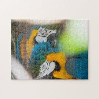 Puzzle Blue Macaws