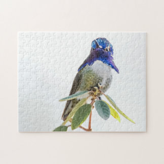 Puzzle: Costa's Hummingbird Jigsaw Puzzle