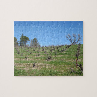 Puzzle: Dormant Vineyard in February with Trees