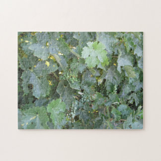 Puzzle: Green Grapes on the Vine