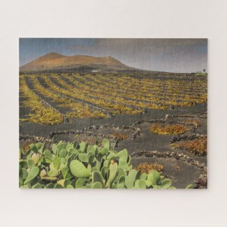 Puzzle Landscape of Lanzarote - Vineyard