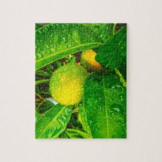 Puzzle - Oranges with Rain Drops