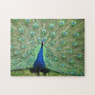 Puzzle - proud peacock