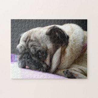 PUZZLE pug Pug Carlin - Pics: Jean Louis Glineur