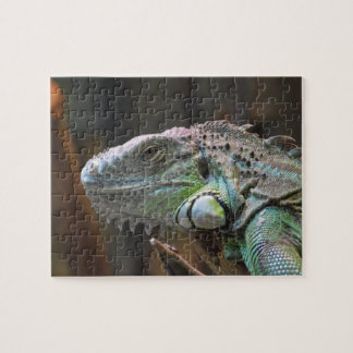 Puzzle with head of colourful Iguana lizard