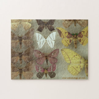 Puzzle with Saturnidae moths
