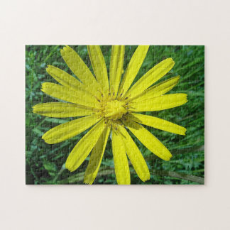 Puzzle yellow daisy bloom