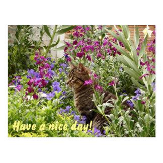 Puzzled cat! postcard