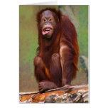 Pygmaeus del Pongo de Orangutang que parece estúpi Tarjetas