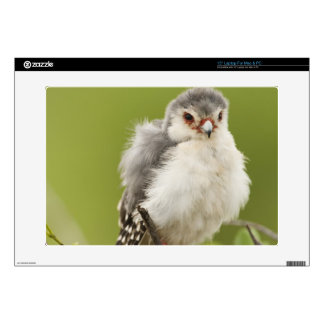 """Pygmy Falcon preening itself in a tree Decals For 15"""" Laptops"""
