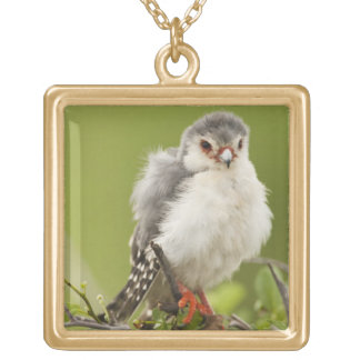 Pygmy Falcon preening itself in a tree Gold Plated Necklace