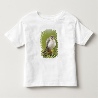 Pygmy Falcon preening itself in a tree T Shirt