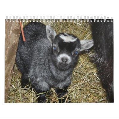 Pygmy Goat Babies Calendar