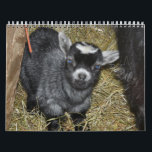 "Pygmy Goat Babies Calendar<br><div class=""desc"">Pygmy Goat babies from my farm in Washington State</div>"