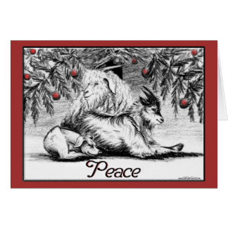 Pygmy Goat Christmas Card Peace