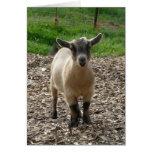 Pygmy Goat Doe Greeting Cards