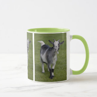 Pygmy Goat Mug