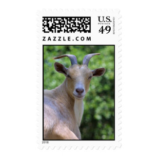 Pygmy Goat Postage Stamp Postage Stamps