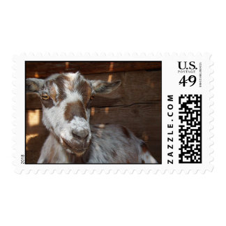 Pygmy Goat Postageage Stamp