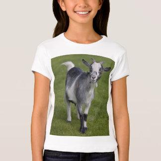 Pygmy Goat Tee