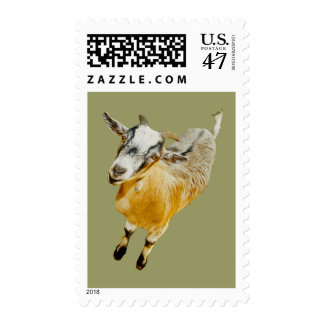 Pygmy Goat US Postage Stamp