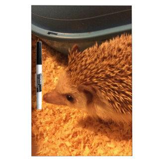 Pygmy  Hedgehog Dry-Erase Board