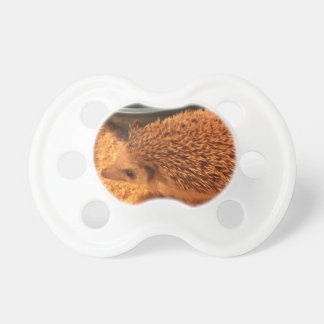 Pygmy  Hedgehog Pacifier