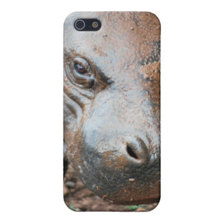 Pygmy Hippo iPhone SE/5/5s Cover
