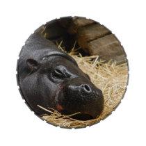 Pygmy Hippo Jelly Belly Candy Tin