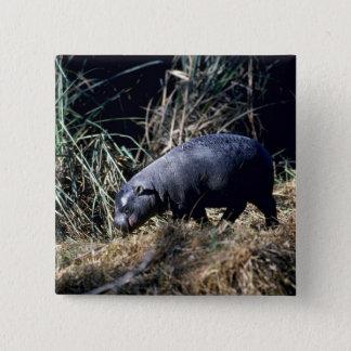 Pygmy Hippo-small calf Button