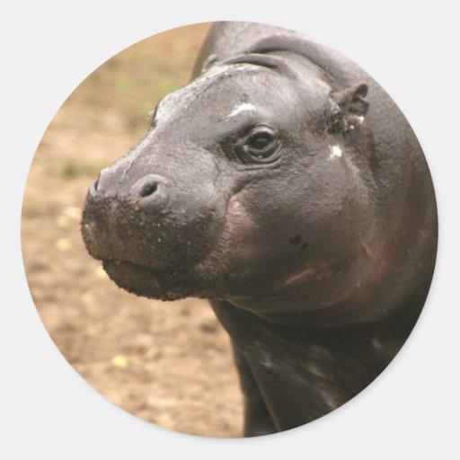 Pygmy Hippo Sticker