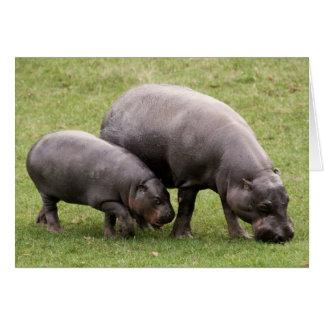 Pygmy Hippos Card