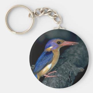 Pygmy Kingfisher Keychains