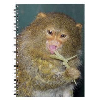 pygmy_marmoset8x10 libro de apuntes con espiral