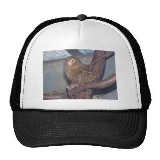 Pygmy Marmoset Portrait Trucker Hat