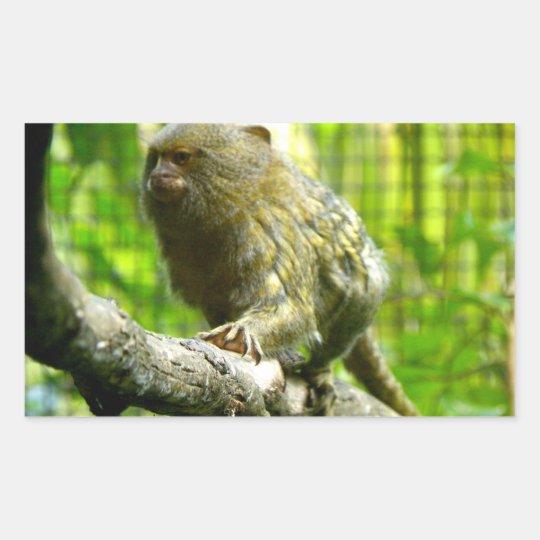 Pygmy Marmoset Rectangular Sticker