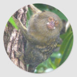 Pygmy Marmoset Sticker